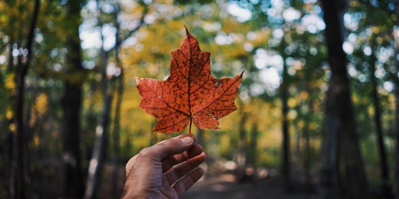 #emotionalsupportcanadian– Kanadier leisten Amerikanern emotionale Unterstützung