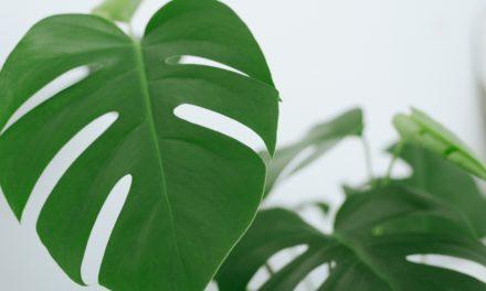 Warum Zimmerpflanzen nicht so nachhaltig sind wie wir denken