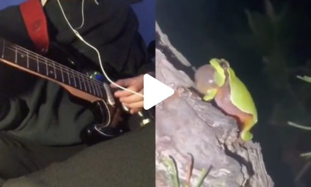 #jazzfrog: Wie aus einem Frosch eine Jazzmelodie wird