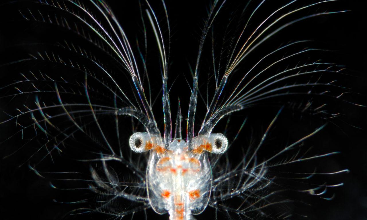 Trickreiche Lebewesen: Darum leuchten einige Tiere