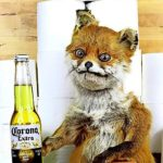 Adele Morse: Die Künstlerin hinter dem Meme-Fuchs