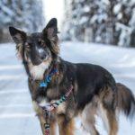 Dogcontent auf Instagram: Der Hund mit dem schiefen Gesicht